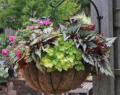 Shade   Planter Idea Book, Container Gardens, Pots, Planters, Windowboxes, Hanging Baskets: Gardener's Supply