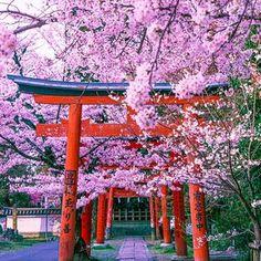 ラムミ (@ramumi8) • Fotos y videos de Instagram Pink Nature, Arch, Sidewalk, Outdoor Structures, Instagram, Japan, Garden, Beauty, Flower