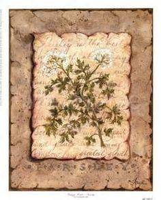 Vintage Herbs-Parsley Digital Print Poster by Constance Lael Online On Sale at… Fine Art Prints, Canvas Prints, Art Commerce, Vintage Botanical Prints, Kitchen Art, Kitchen Ideas, Framed Artwork, Digital Prints, Vintage World Maps
