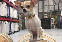 These cute distillery dogs work just as hard as their owners to make the best craft spirits. Cute Dog Pictures, Distillery, Funny Cute, Cute Dogs, French Bulldog, News, How To Make, Animals, Animales