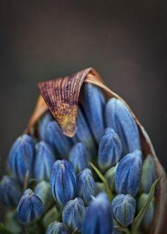 New Blue, 2017  © Hugh Waller