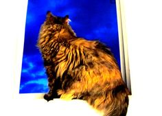 gift Cats, Animals, Gatos, Animales, Animaux, Animal, Cat, Animais, Kitty
