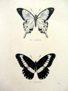 Butterfly engraving black zeichnungen, schmetterlingstattoo im vintage-stil Vintage Butterfly Tattoo, Butterfly Tattoo Cover Up, Butterfly Tattoo Meaning, Butterfly Drawing, Butterfly Tattoo Designs, Butterfly Print, Butterfly Mandala, Black Tattoo Cover Up, Butterfly Frame