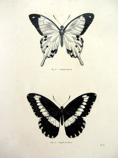 Vintage butterfly print antique original 1860 by LyraNebulaPrints, $25.00
