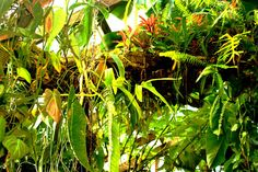 The Exotic Rainforest *fantastic site with SO MUCH info on tropical plants for an atrium*