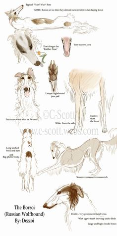 :Borzoi Study: by Dezzoi LOL the rubber nose...hilarious but so true