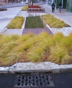 Here is a bioswale in front of the Bullitt Center where 15th Avenue used to exist