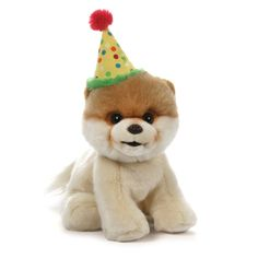 "Boo, the World's Cutest Dog Birthday 9"""