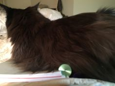 Orca helps me use my Levenger disc planner.
