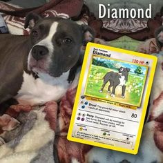 Artist Illustrates Pets Into Pokemon Cards And They Look Absolutely Adorable Fake Pokemon Cards, Pokemon Go, Puppy Jokes, Puppy Images, Pokemon Trading Card, Puppy Breeds, Custom Cards, Dog Lover Gifts, Card Games