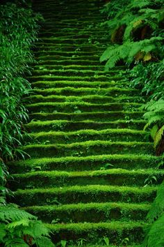 Moss in temple stairs 鎌倉妙法寺 Myoho-ji Temple, Kamakura, Japan Kamakura, Beautiful World, Beautiful Places, Beautiful Scenery, Beautiful Beautiful, Wonderful Places, Nature Verte, Japan Photo, Belleza Natural