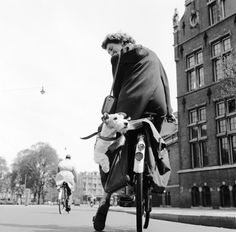 Vintage Photo of Fox Terrier on Bicycle Chien Fox Terrier, Wirehaired Fox Terrier, Wire Fox Terrier, Dog Photos, Dog Pictures, Happy National Dog Day, Jack Russell Terrier, Training Your Dog, Cutest Animals