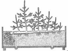 ФОРМЫ ДЕРЕВЬЕВ – ФОРМЫ БОНСАИ Terrarium Plants, Bonsai Plants, Bonsai Garden, Bonsai Pruning, Indoor Fairy Gardens, Mini Bonsai, Bonsai Art, Goat Farming, Gardens