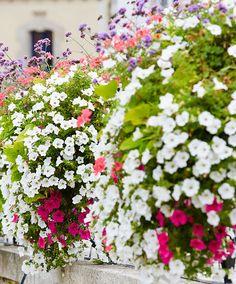Seed Mat 'White Summer' | Seeds from Bakker Spalding Garden Company