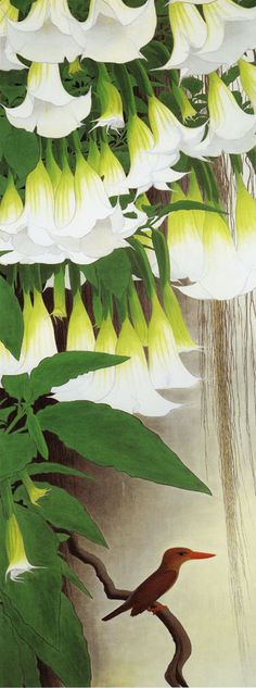 datura flowers - by Isson Tanaka