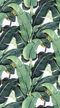 Used this and a picture from Martinique as inspiration for an original water color in palm leaf design. The original Martinique Banana Leaf wallpaper, which was created by decorator Don Loper in 1942 for the Beverly Hills Hotel. Textures Patterns, Print Patterns, Leaf Patterns, Green Leaves, Plant Leaves, Motif Tropical, Tropical Pattern, Flamingo Pattern, Tropical Leaves