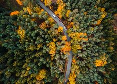 HD wallpaper: Road in the Woods Aerial, autumn, bird's eye, cars, drone photography Stock Photo Sites, Free Stock Photos, Royalty Free Photos, Snowy Forest, Forest Road, Nature Images, Nature Photos, The Rock Photos, Forest Wallpaper