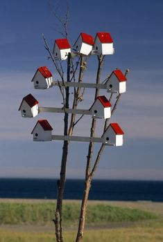 A group of birdhouses on a small tree.