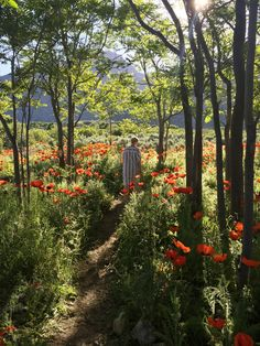 The North West Homestad says: Utah's wild poppy fields are in FULL bloom about June - August. Every mountain side is bursting with life and colour, there isn't anything else like it.  IG: the_north_west_homestead