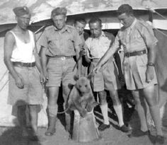 Baby Wojtek and comrades, Iran, 1942. Baby Wojtek and comrades in Iran, shortly after he joined the Polish Army as an orphan baby bear. Small he did not remain ...