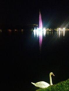 Lake Eola 🌾