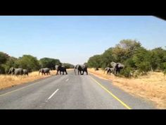 Poacher killed by Botswana army  - Zamsato - Blog.