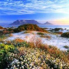 V&a Waterfront, Table Mountain, Cape Town, South Africa, Trees, Mountains, Life, Outdoor, Nature
