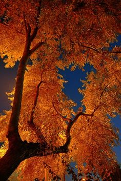 Autumn orange and deep sky blue! Nature sure knows how to dress up!