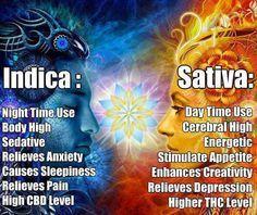 Indica: Sounds Great For FIbro Minus The Sedative Side Effect. pinned to LordVaperPens.com Marijuana Board