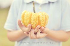pumpkin patch inspiration