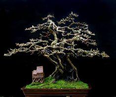Bonsai Art, Bonsai Trees, Single Tree, Miniature Trees, Growing Tree, Japanese Art, Art Forms, Mini Gardens, Beautiful