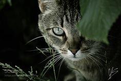 Untitled by MissSerenity #animals #animal #pet #pets #animales #animallovers #photooftheday #amazing #picoftheday