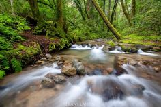"""4,242 Likes, 39 Comments - Frans Lanting (@franslanting) on Instagram: """"After abundant winter rain, streams in the Santa Cruz Mountains are full of fresh water. I made…"""""""