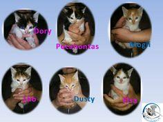 Katzenwelpen Haltung: Rasse: Europ. Kurzhaar Tierärztliche Versorgung: geimpft, gechipt, entwurmt Alter: