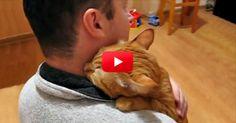 Questo è il gatto più amorevole che abbiamo mai visto