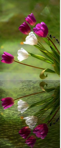 Mirror Image of cool flower in water. its look amazing.