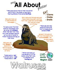 My All About Walrus Book - (Arctic/Polar Animals) by Courtney McKerley Animal Facts, My Animal, Arctic Wolf, Arctic Hare, Artic Animals, Animal Doctor, Ocean Unit, Havanese Dogs, Animal Projects