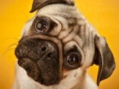 The Science and Psychology of Dog Language Best Dog Food, Dry Dog Food, Best Dogs, Fruit Dogs Can Eat, Can Dogs Eat, Dog Grooming Business, Pet Grooming, Havanese Grooming, Schnauzer Grooming