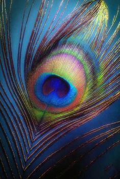 🌻 Jai Shri Radhe Krishna 🙏 🌻 Watch out Mahabharat and Ramayan All Episode Ramayan:… Lord Krishna Wallpapers, Radha Krishna Wallpaper, Radha Krishna Images, Krishna Pictures, Krishna Art, Radhe Krishna, Shri Hanuman, Peacock Painting, Peacock Art