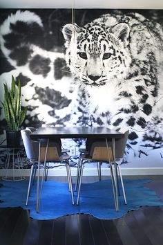 I have a snow leopard wall mural in my dining room. I've been using the super cheap engineer prints you can get at Kinko's or Sta. Snow Leopard Wallpaper, B&w Wallpaper, Cheap Wallpaper, Photowall Ideas, Poster Mural, Engineer Prints, Wow Products, Diy Wall, Luxury Bedrooms