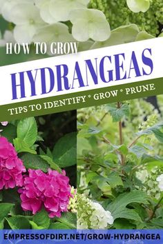 Garden Ideas Discover How to Grow Hydrangeas Helpful tips to identify your hydrangea growing tips and which types need pruning (some never should) including smooth bigleaf panicle climbing mountain and oakleaf varieties. Garden Cottage, Garden Club, Sun Garden, Easy Garden, Hydrangea Landscaping, Garden Landscaping, Landscaping Design, Gardening For Beginners, Gardening Tips