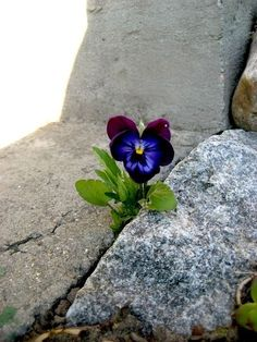 "I like it when a flower or a little tuft of grass grows through a crack in the concrete. It's so fuckin' heroic."" ― George Carlin"