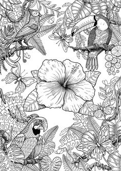 Birds on Behance Summer Coloring Pages, Fairy Coloring Pages, Coloring Book Art, Adult Coloring Book Pages, Printable Adult Coloring Pages, Animal Coloring Pages, Mandala Coloring, Colorful Drawings, Colorful Pictures