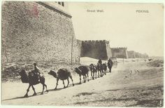 Peking 1910: b/w postcard depicting a caravan with camels at the Great Wall in Beijing.