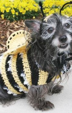 Crochet a bee costume for dogs free pattern