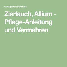 Zierlauch, Allium - Pflege-Anleitung und Vermehren