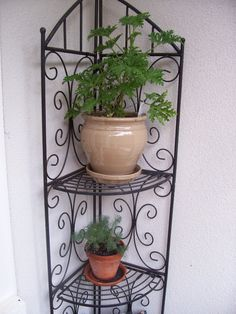 1000 Images About My Little Balcony On Pinterest