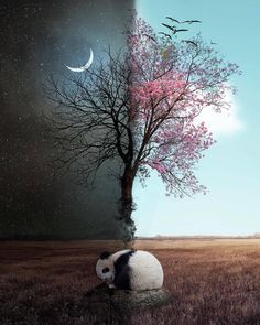 Creative and Dreamli Creative and Dreamlike Photo Manipulations by Natacha Einat Panda Wallpapers, Cute Wallpapers, Beautiful Nature Wallpaper, Panda Love, Tier Fotos, Galaxy Wallpaper, Day For Night, Photo Manipulation, Animal Photography