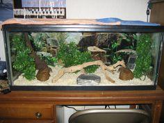 Habitat inspiration for the ball python.