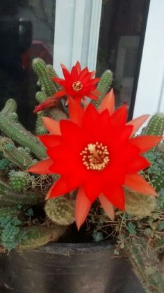 Cactus de mexico